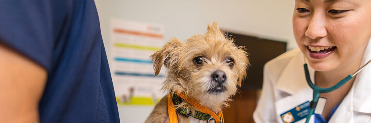Senior Counsel & Senior Director In Portland - Banfield Pet
