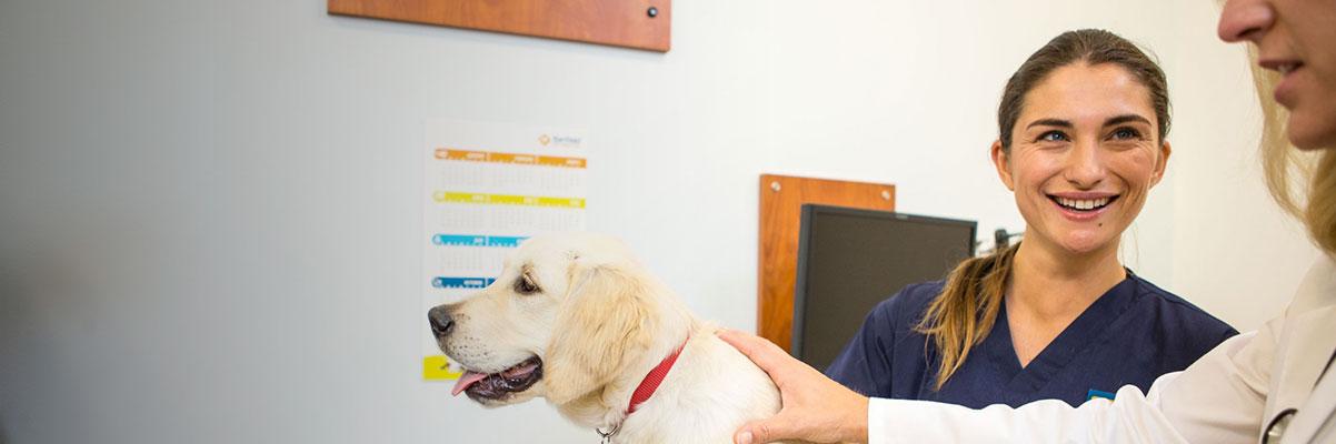 Search Job Opportunites - Banfield Pet Hospital Jobs
