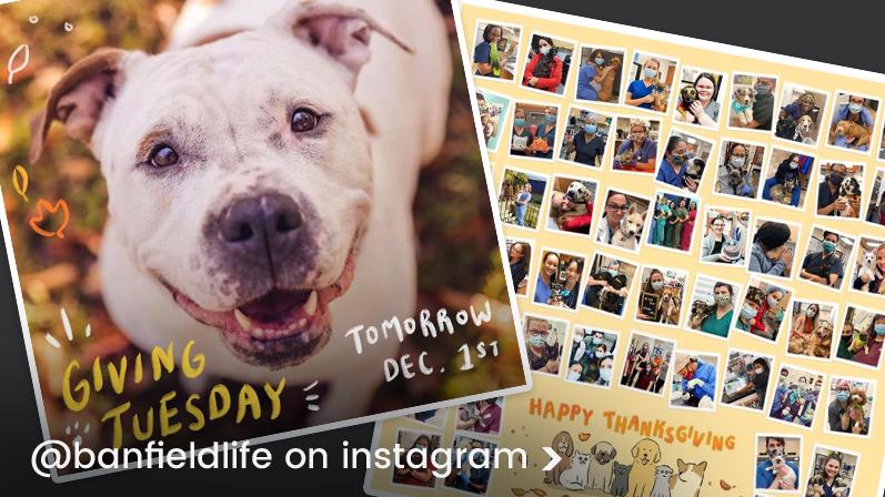 Banfield Life Instagram
