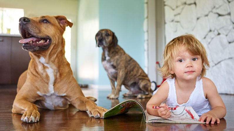 A kid with two dogies