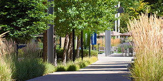 Walking path at VMware