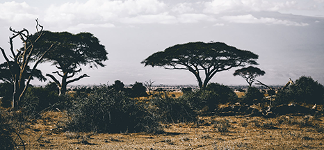 Image for Kenya
