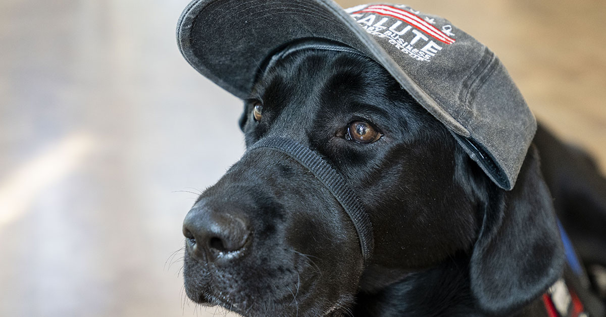 Capital One partnering with Patriot PAWS, a non-profit organization, to raise a service dog in training in an office setting at Capital One