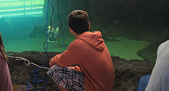 Kid looking at aquarium