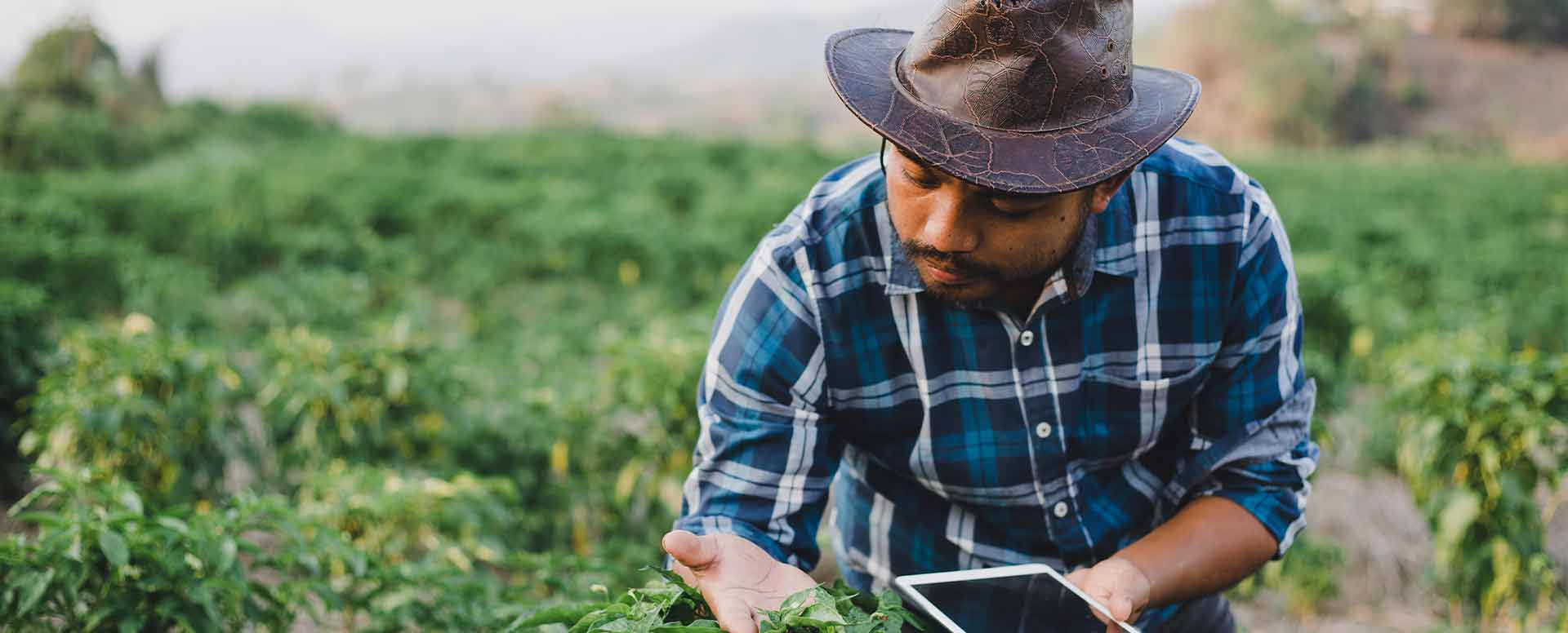 A man checking plants in field