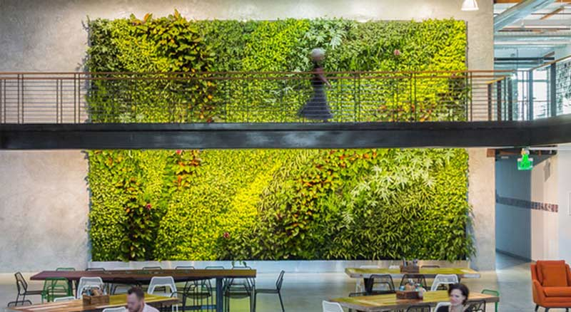 An open plan, indoor office building lobby that, strangely, has a beautiful wall of green plants, with a person walking across an elevated pathway in front..