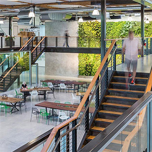 A sunny open office with an ivy wall and a balcony walkway