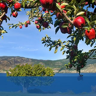 apple tree with mountains in background