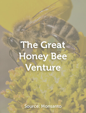 The Great Honey Bee Venture