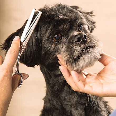 Dog getting hair clipped