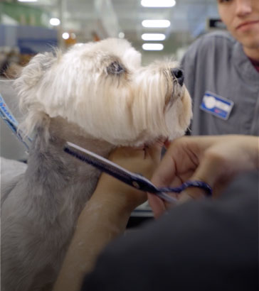 Behind the scenes - PetSmart Grooming